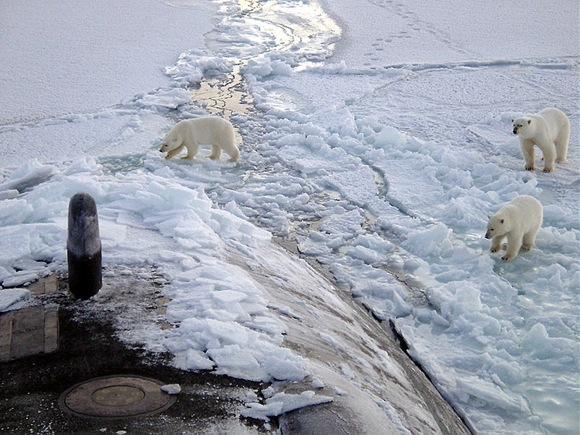 Three Polar bears approach the starboard bow of the Los Angeles-class fast attack submarine USS Honolulu (SSN 718) while surfaced 280 miles from the North Pole. Sighted by a lookout from the bridge (sail) of the submarine, the bears investigated the boat for almost 2 hours before leaving. Credit: Wikimedia