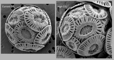 Coccoliths