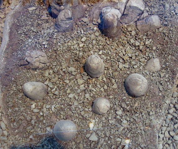 A clutch of partially buried Troodon formosus eggs. Image via Wikimedia Commons.