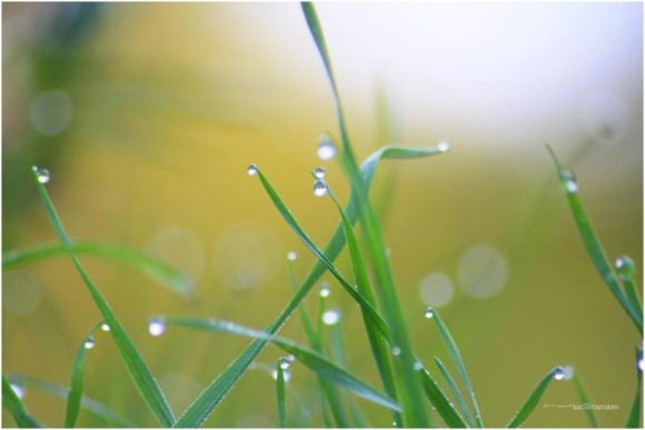 Pearls of water on grass, in the morning, as captured by our friend VegaStar Carpentier.