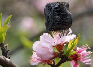 ultralight-aerogel-on-cherry-blossom-300