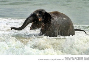 Video: Baby elephant sees ocean for the first time | Earth ...