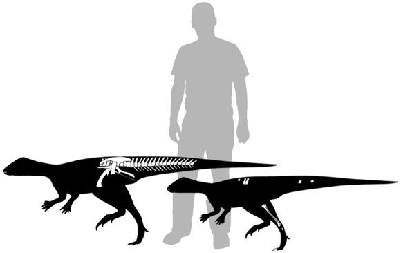 Dino and human