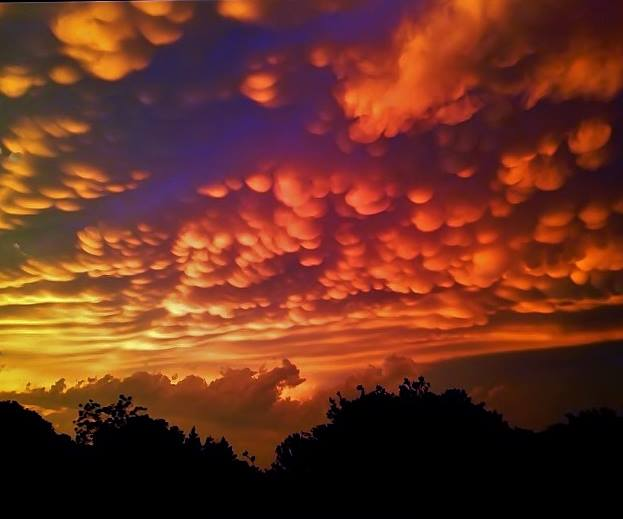 Spectacularly orange and yellow lit mammatus clouds covering the sky.