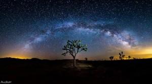 Milky Way Galaxy arching over a Joshua tree