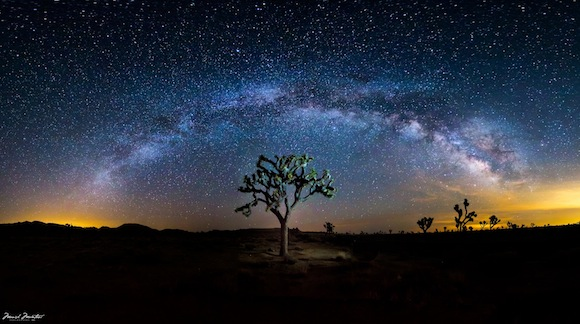 Milky Way Galaxy arching over a Joshua tree against dense star field.
