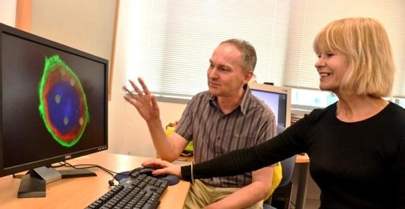 Scientists develop new tumor-killer