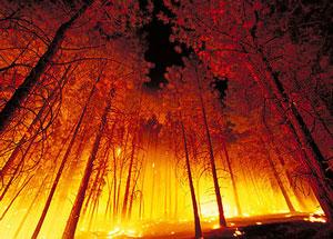 wildfire-nifc-300