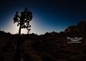 Joshua-Tree-National-Park-6-22-2013-Patricia-Knight Photography