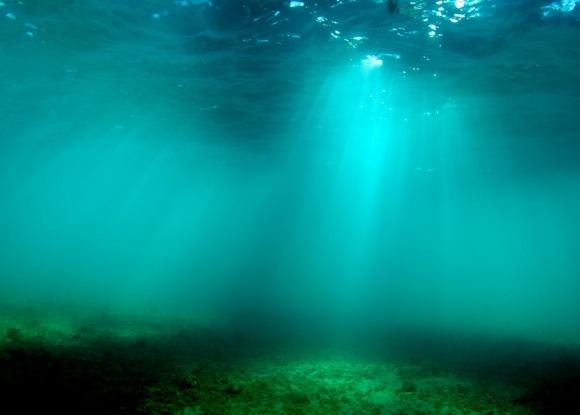 atlantic-spade-fish