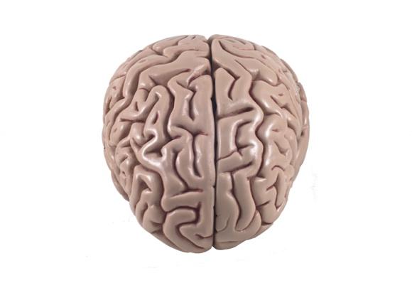 A revolutionary new 3D digital brain atlas