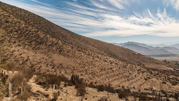 Semi-arid Coquimbo, Chile.
