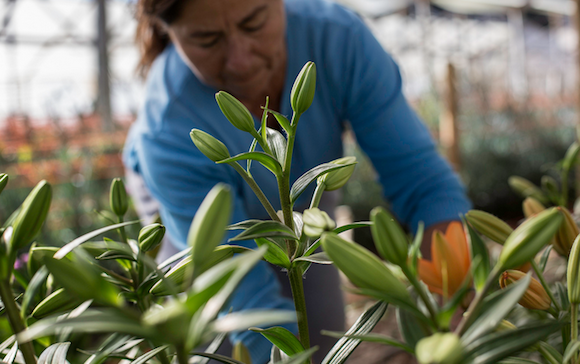 Dina Cifuentes grows flowers and vegetables and depends on irrigation from the Puclaro reservoir. This year, Cifuentes preemptively decided to cut her production by 50% because she worried about not receiving enough water for her plants.