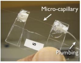 micro-capillary