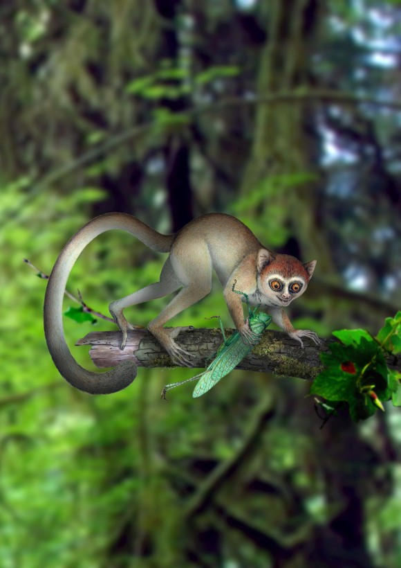 Meet the oldest known primate, as it might have looked in its natural habitat.  Artist's concept via Nature.
