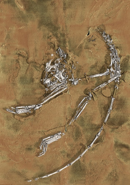 Reconstruction of the fossil of Archicebus achilles, via Nature News.