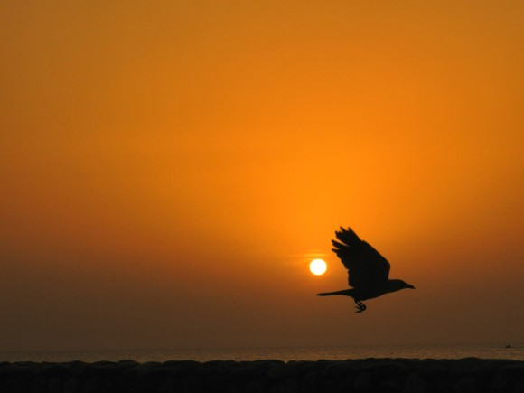 A pure orange sky, with white setting sun, and a large bird flying through the scene.