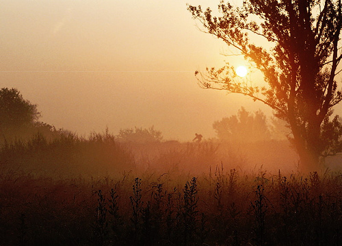 Early sunrise by Flickr user Raffee