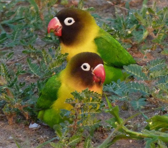Tanzania's birds survive in protected network | Earth ...