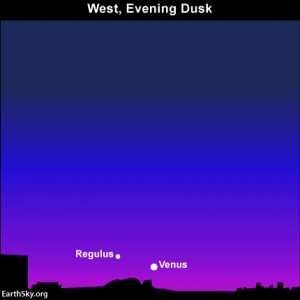 This evening, the dazzling planet Venus and the star Regulus shine low in the west at evening dusk. You may need binoculars to catch Regulus.