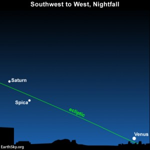 As Venus sits low in the west at late dusk or early nightfall, the planet Saturn and the star Spica pop out to the east of Venus. The planets are always found on or near the pathway of the ecliptic