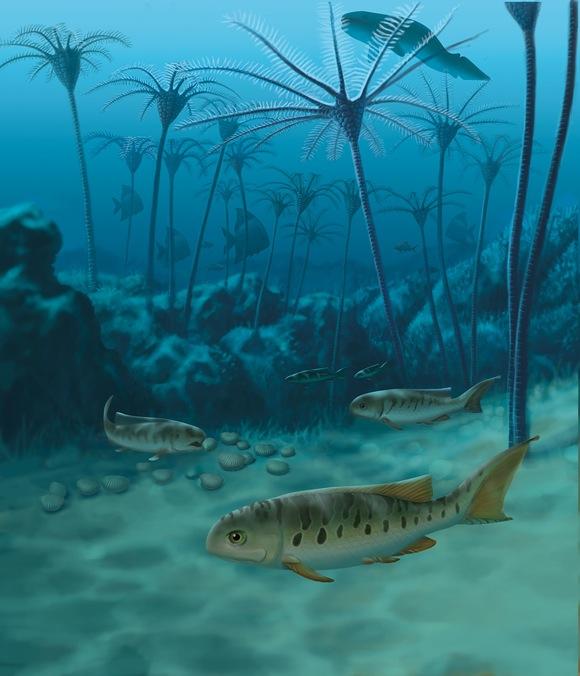 Styracopterus