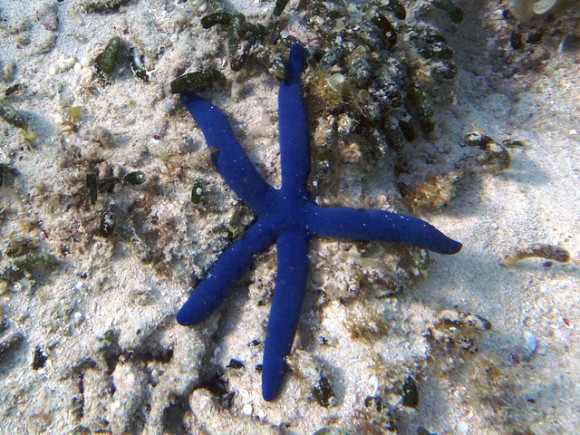 Starfish have eyes at the tips of their arms