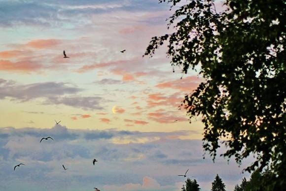 Photo taken by EarthSky Facebook friend Birgit Boden in northern Sweden.  Thank you, Birgit!