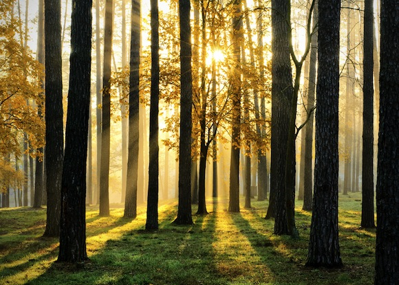 morning-forest-scence