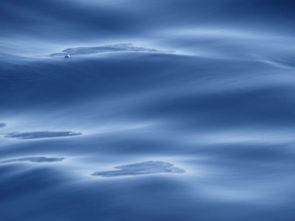 surface-oil-sheen