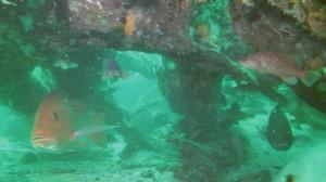 underwater-cypress-forest-ben-raines-580