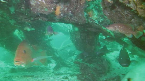 An ancient underwater forest in the Gulf of Mexico Underwater-cypress-forest-ben-raines-580