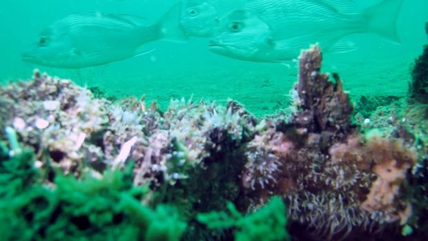 An ancient underwater forest in the Gulf of Mexico Underwater-forest-benpraines-3