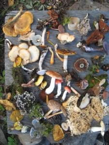 Fungi-of-Saskatchewan