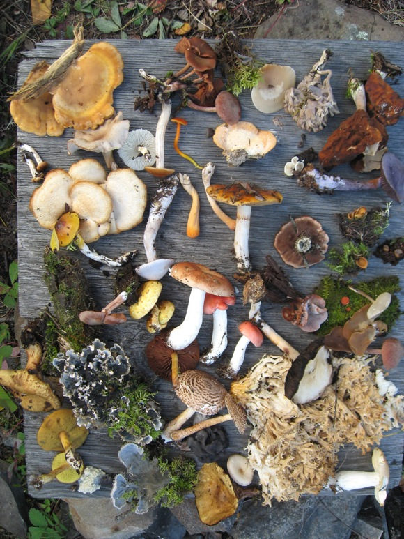 research paper on fungi