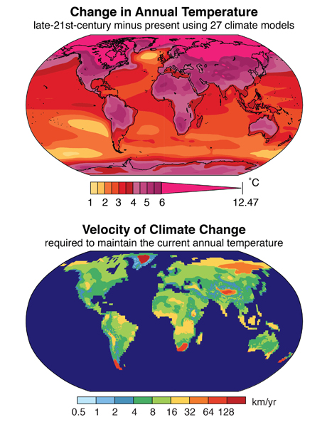 The top map shows global temperatures in the late 21st century, based on current warming trends. The bottom map illustrates the velocity of climate change, or how far species in any given area will need to migrate by the end of the 21st century to experience climate similar to present. Images via Stanford University.