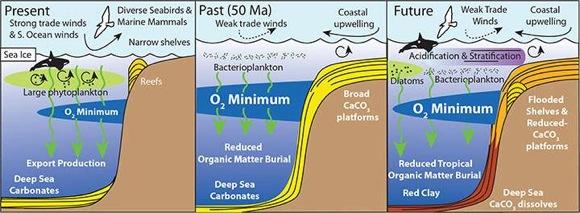 marine-life-characteristics