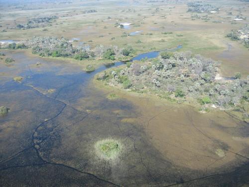 The Okavango Delta in Botswana. Image credit: Teo Gomez