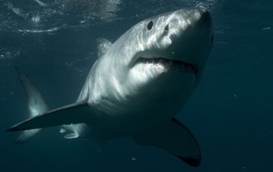 [Ominous music playing ...] Shark Week starts August 4, 2013 on the Discovery Channel!