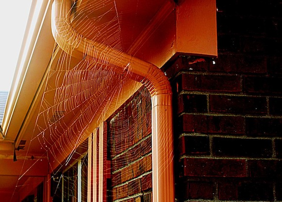 spider-web-don-spain