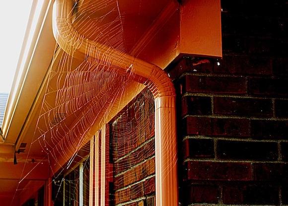 spider-web-don-spain