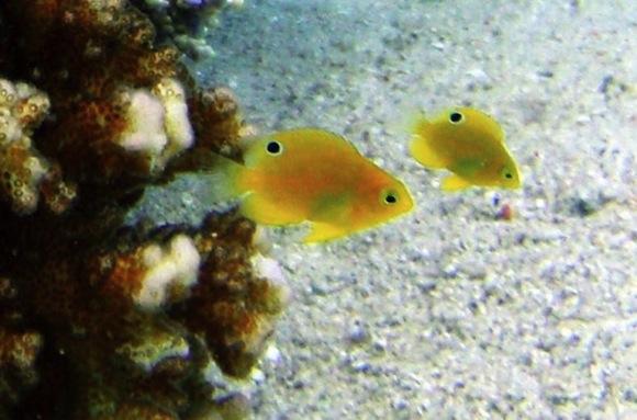 tiny-fish-eyes