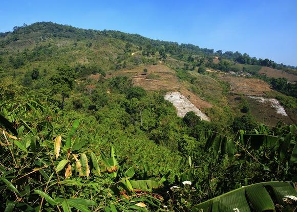 Thailand-rainforest-destruction