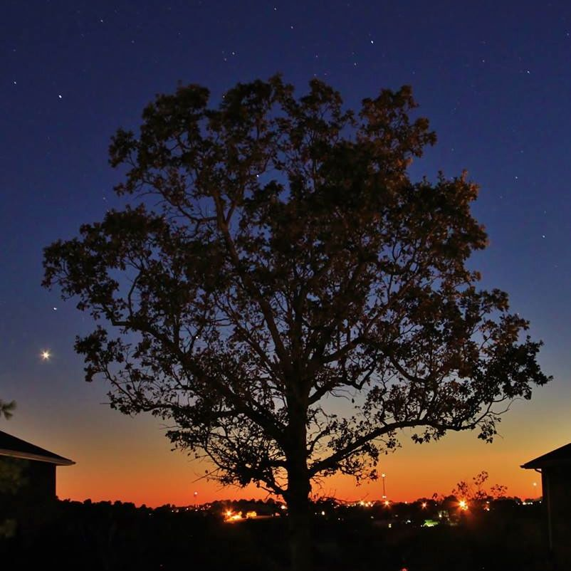 Tree, twilight, planets