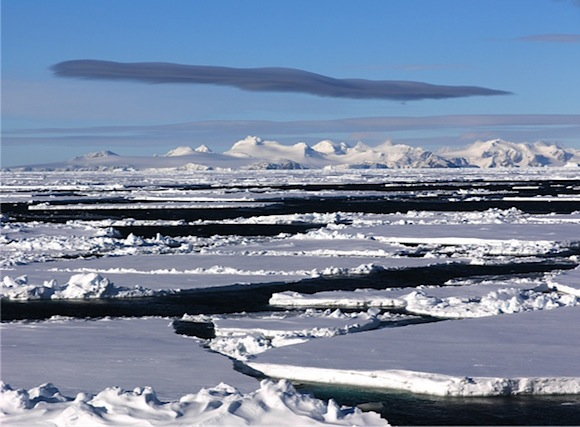 Antarctic and Arctic ice floes are a rich source of life and mic