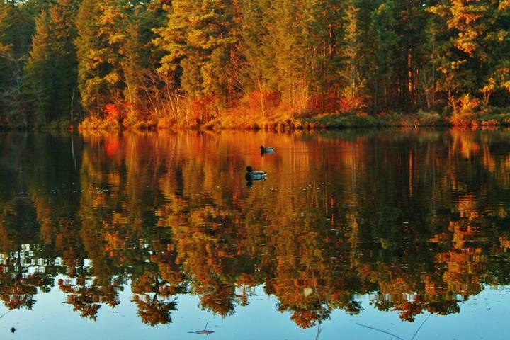 Another picture of autumn trees reflected in a lake with small rowboats in it.