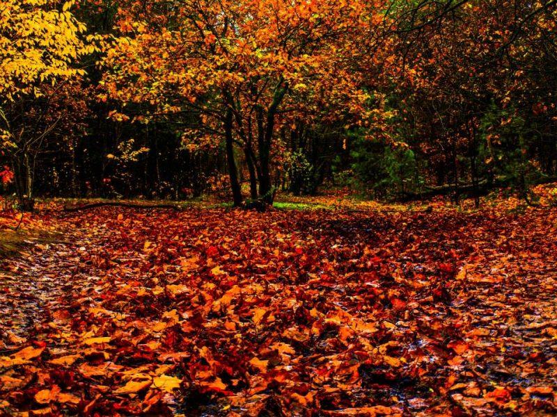 Why Trees Shed Their Leaves Earth Earthsky