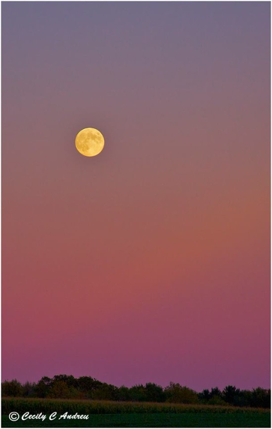 Beautiful shot of the September 18, 2013 Harvest Moon from Cecily Andreu in Rochester, NY. She wrote: