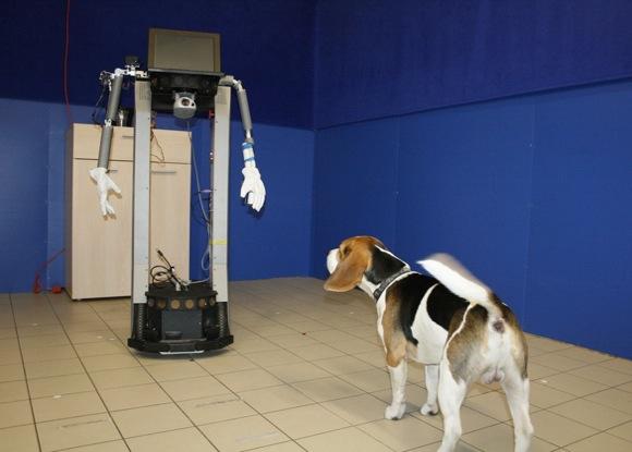 robot-dog-interaction