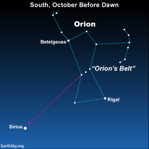 Star chart of constellation Orion with arrow pointing from three stars in a short line to a bright star.